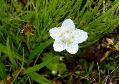 Pāvilosta - Labrags: purva atālene, 2016. gada augs