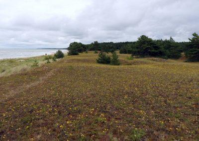Pāvilosta - Labrags: pelēko kāpu pļavas