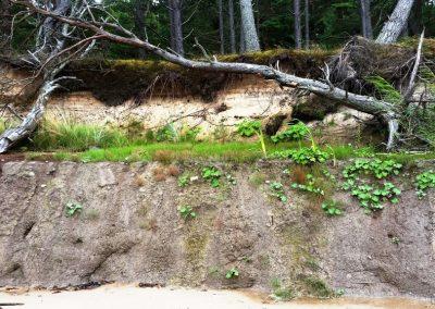 Pāvilosta - Labrags: mini pļaviņas uz māla