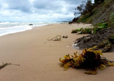 Pāvilosta - Labrags: jūra atradumiem bagāta