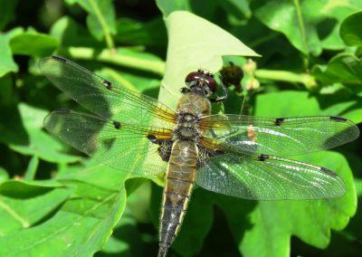 Pie Engures ezera ir ne vien daudz putnu, bet arī ļoti daudz spāru