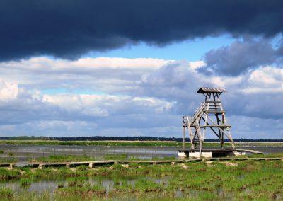Engures ezera putnu vērošans tornis, kas nudien neliks vilties, un putnu te ir daudz jo daudz