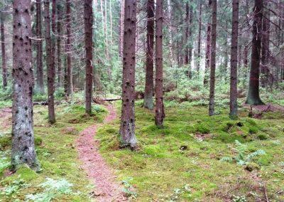 Ejot pa takām, sanāk daudz iet pa egļu mežiem.