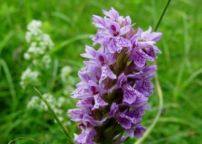 Vērīgākiem nepaslīdzēs garām arī orhideju audzīte