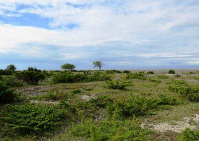 Tipiska salas ainava (Foto: Zaiga Kaire)