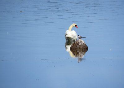 Osmusāre ir būtiska putnu pārlidošanas vieta, tādēļ pavasarī un rudenī te var vērot tūkstošiem putnu (Foto: Zaiga Kaire)