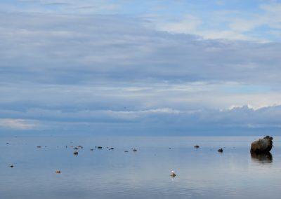 Sala pamazām aug un vienā tās pusē jūra ir ļoti sekla (Foto: Zaiga Kaire)