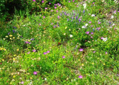 Jūlijs ir īsts ziedu laiks (Foto: Zaiga Kaire)