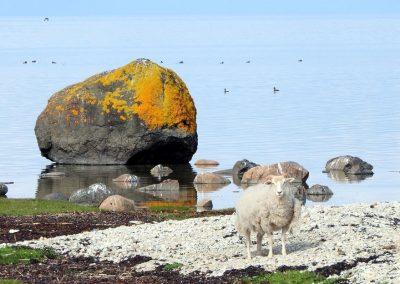 Osta ir vienā galā, bāka - otrā. Līdz bākai gājām pa salas kreiso krastu. (Foto: Zaiga Kaire)