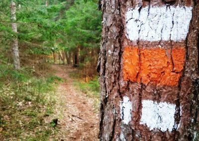 Mežā ir norādes, kas apzīmē virzienu un palīdz neapmaldīties