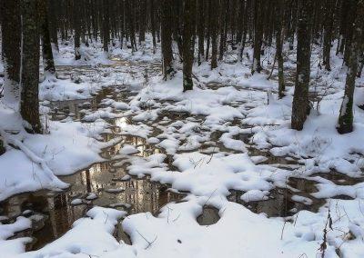 Ziemā viss ir klusi un mierīgi