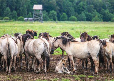 Dunduru pļavas (Foto: Anita Šteinberga)