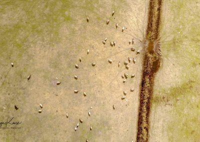 Dunduru pļavas (Foto: Zaiga Kaire)